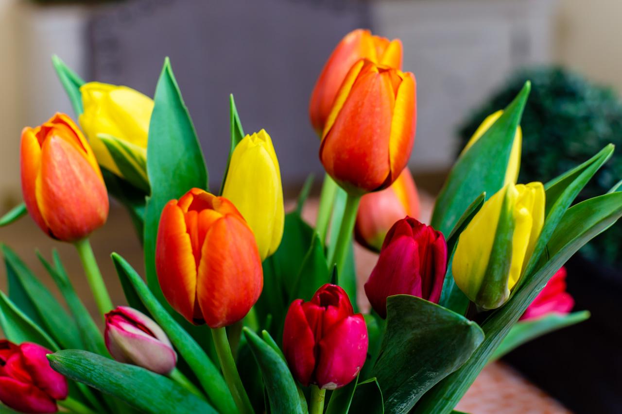 Tulips in Season